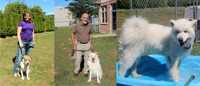 volunteer-dog-walking