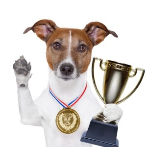 nominate dog - paw up with medal