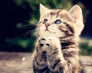 praying kitten